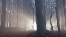 Philip Rasuo / Dreamstime.com